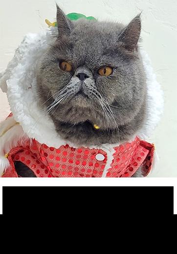 memecatboss 我的貓BOSS